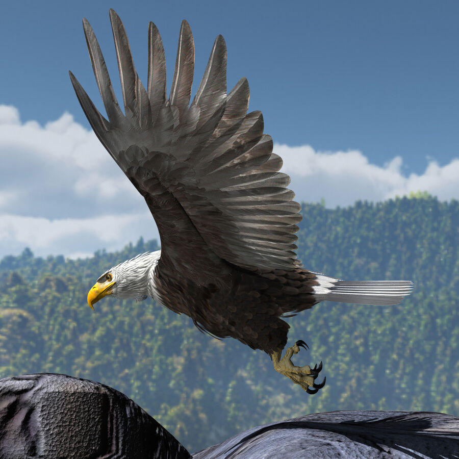 American Bald Eagle royalty-free 3d model - Preview no. 18