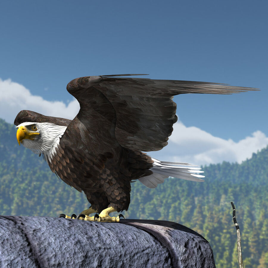 American Bald Eagle royalty-free 3d model - Preview no. 17