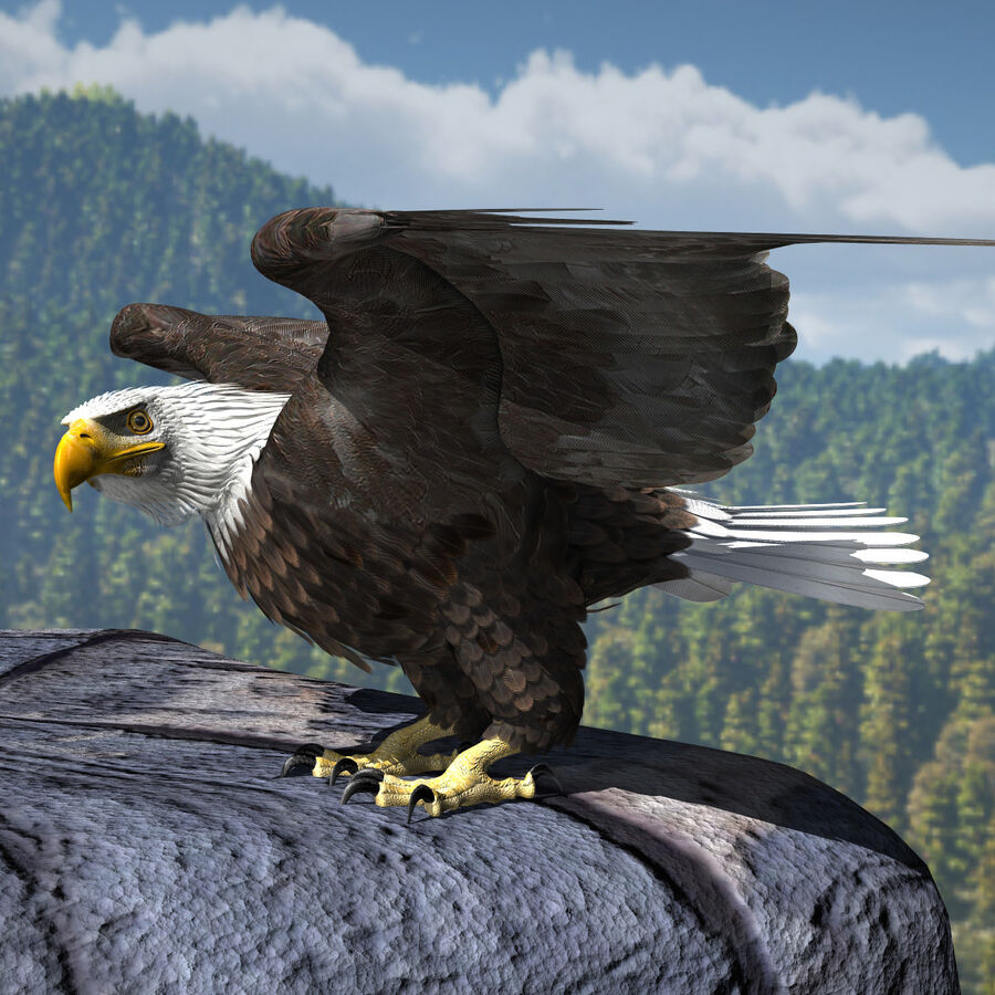 American Bald Eagle royalty-free 3d model - Preview no. 16