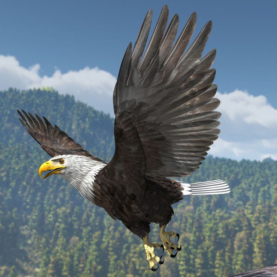 American Bald Eagle royalty-free 3d model - Preview no. 24