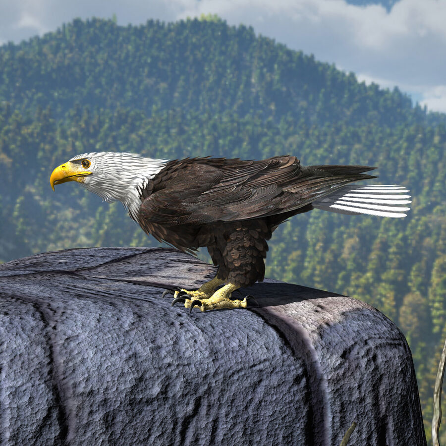 American Bald Eagle royalty-free 3d model - Preview no. 8