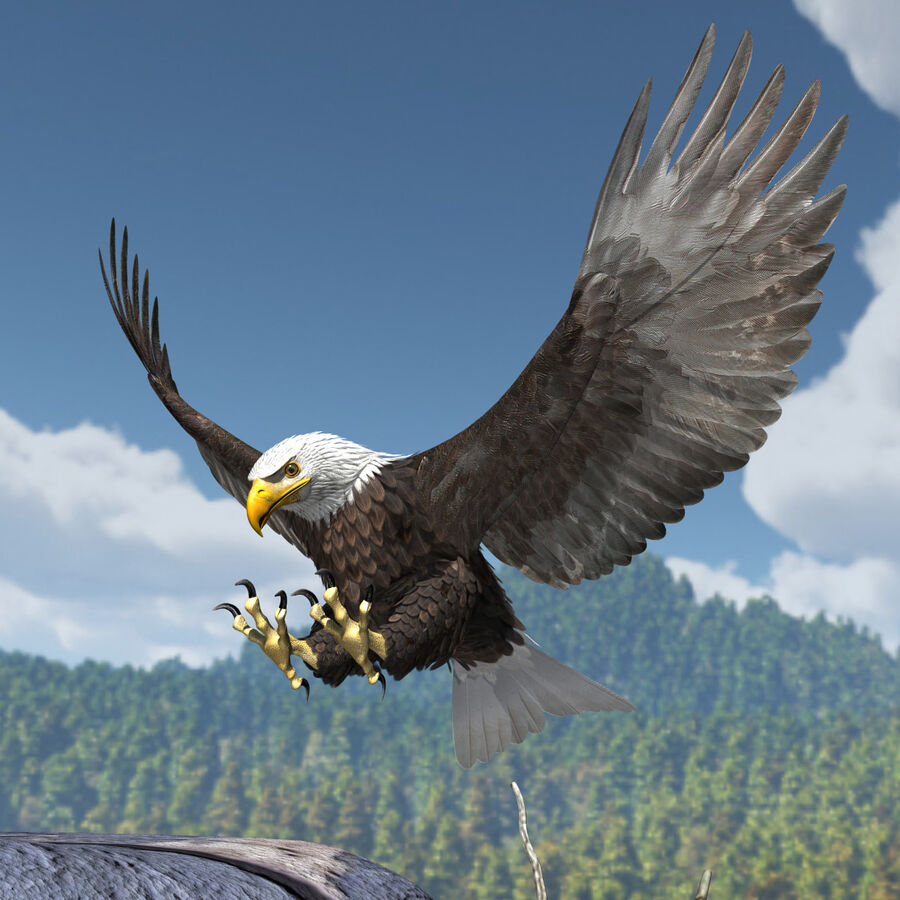 American Bald Eagle royalty-free 3d model - Preview no. 14