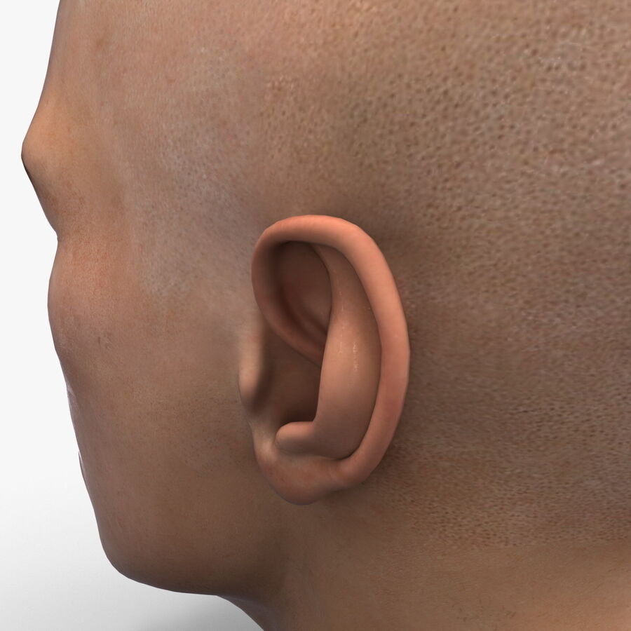 Male Head Collection royalty-free 3d model - Preview no. 65