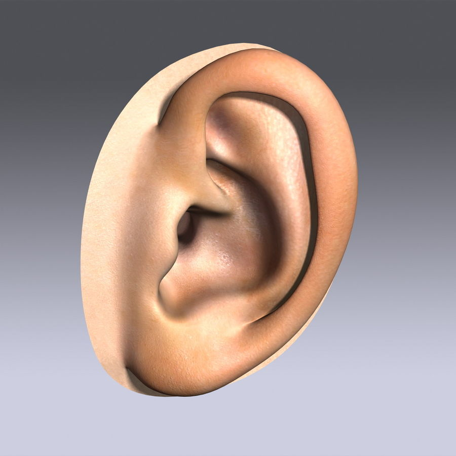 Human Ear royalty-free 3d model - Preview no. 2