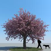 Вишневое дерево Тип 12 3d model