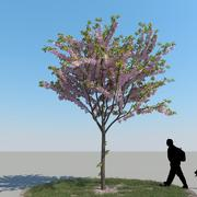 Cherry Tree Type 06 3d model
