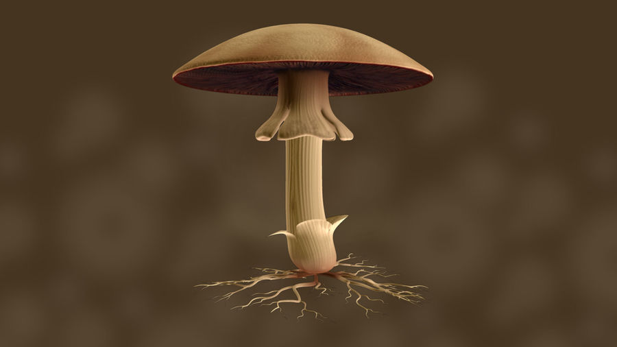 Agaricus royalty-free 3d model - Preview no. 2