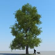Linden Tree Type 04 3d model