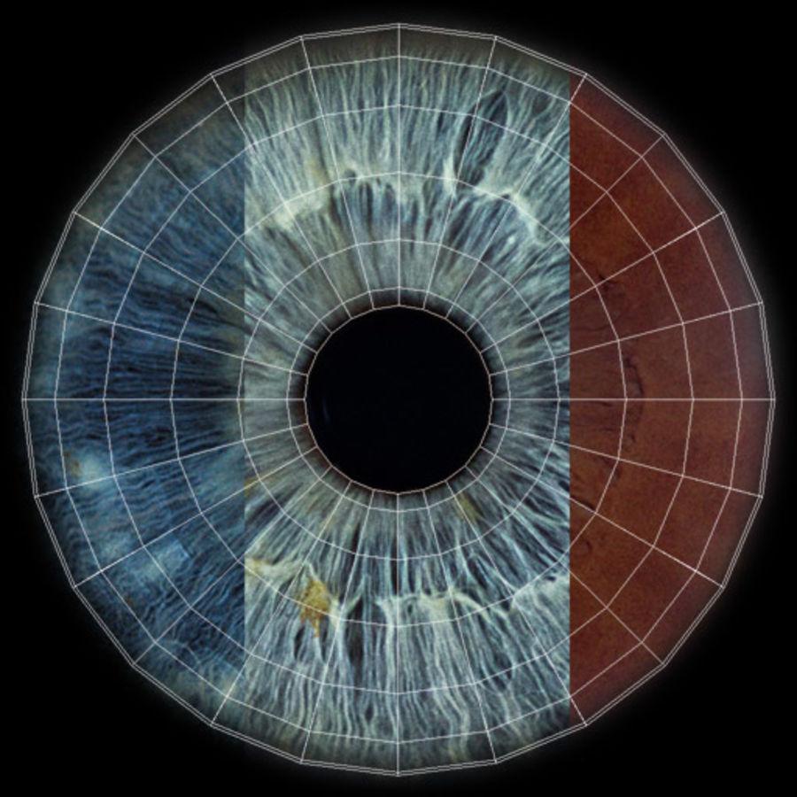 Realistic Human Eye royalty-free 3d model - Preview no. 16