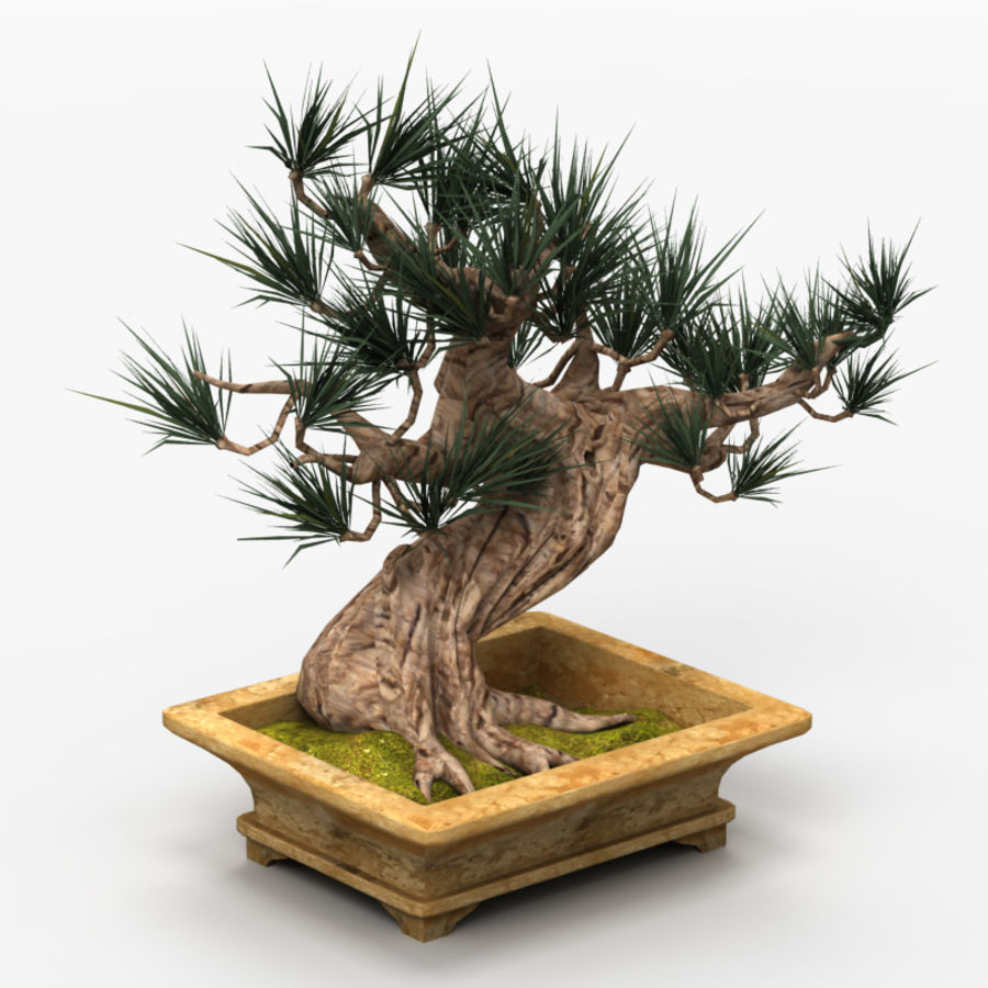 Bonsai Tree royalty-free 3d model - Preview no. 2
