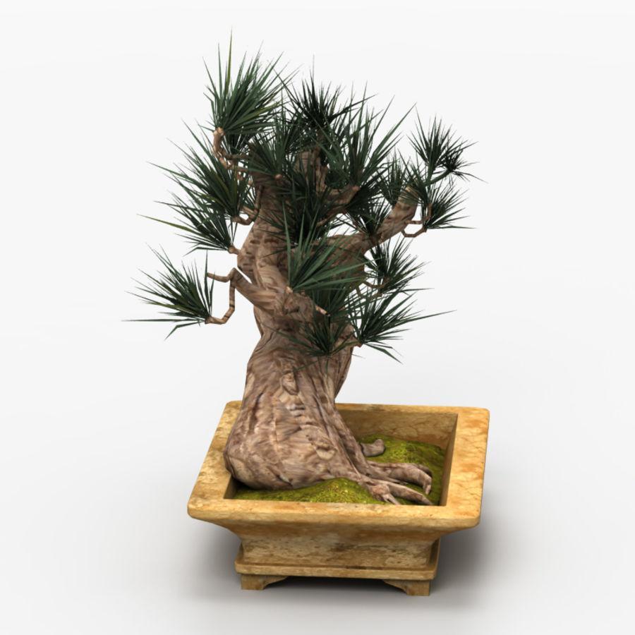 Bonsai Tree royalty-free 3d model - Preview no. 3
