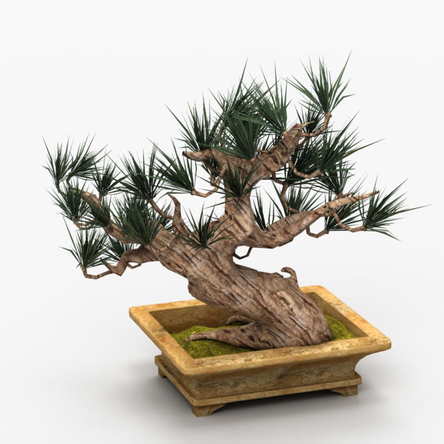 Bonsai Tree royalty-free 3d model - Preview no. 5