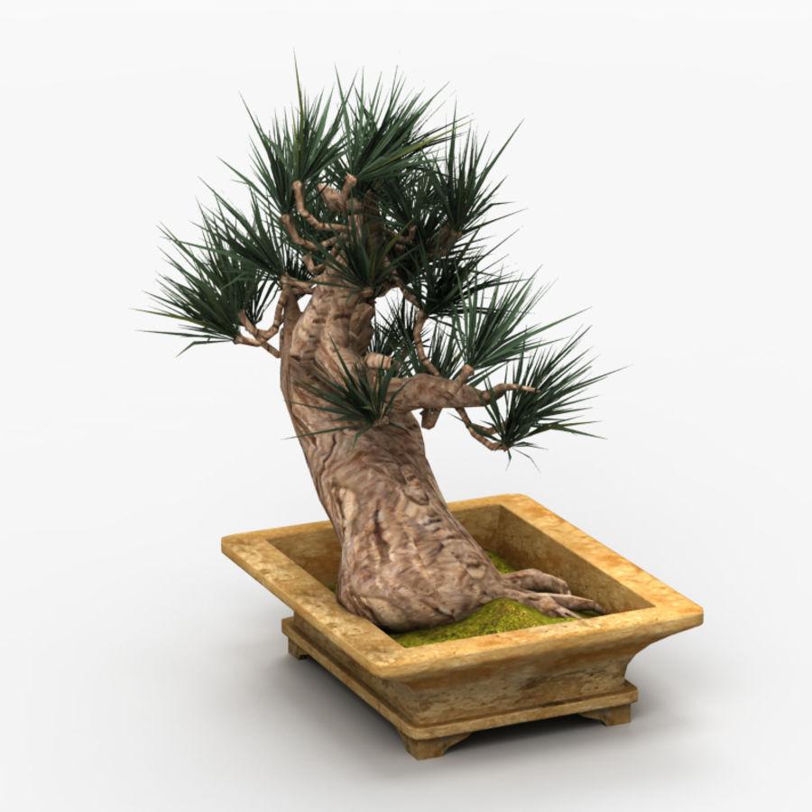Bonsai Tree royalty-free 3d model - Preview no. 4