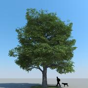 Maple Tree Type 12 3d model