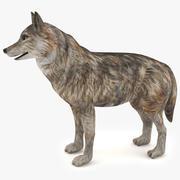 늑대 3d model