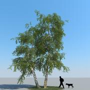 Birch Tree Type 11 3d model