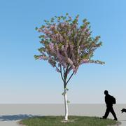 Cherry Tree Type03 3d model