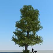 Drzewo lipowe typu 05 3d model