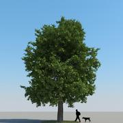 Chestnut Tree Type 09 3d model