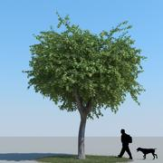 Maple Tree Type 08 3d model