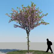 Cherry Tree Type04 3d model