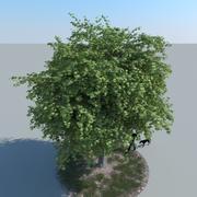 Maple Tree Type 07 3d model