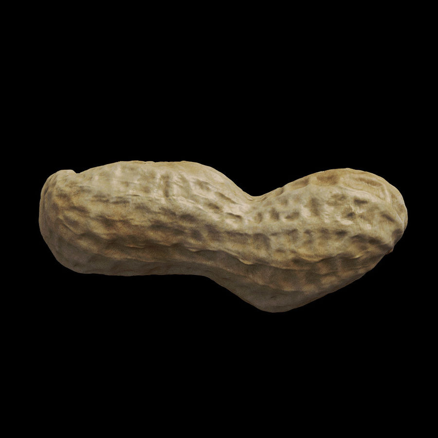 peanut royalty-free 3d model - Preview no. 7
