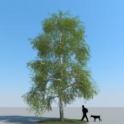 Birch Tree Type 03 3d model