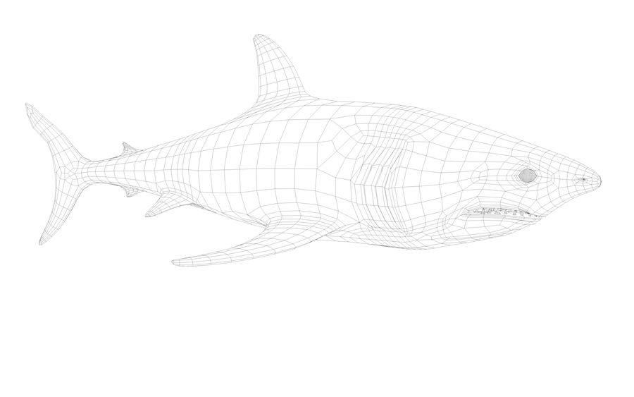 Shark royalty-free 3d model - Preview no. 7