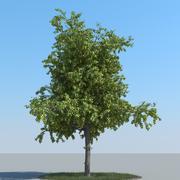 Tipo di albero di tiglio 09 3d model