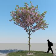Cherry Tree Type 05 3d model