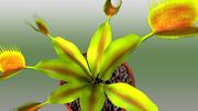 Dionaea 3d model