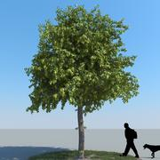 Linden Tree Type 08 3d model