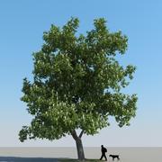 Chestnut Tree Type 01 3d model