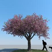 Cherry Tree Type 10 3d model