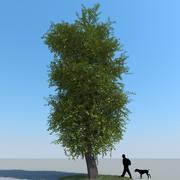 Drzewo lipowe typ 01 3d model
