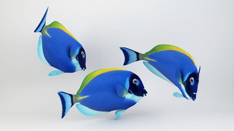 Blue Tang Fish royalty-free 3d model - Preview no. 3