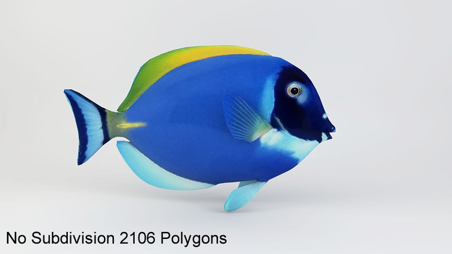 Blue Tang Fish royalty-free 3d model - Preview no. 7