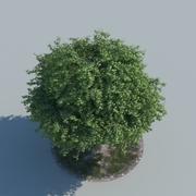 Maple Tree Type 04 3d model