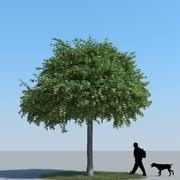 Maple Tree Type 04 3d model
