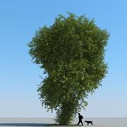 Linden Tree Type 03 3d model