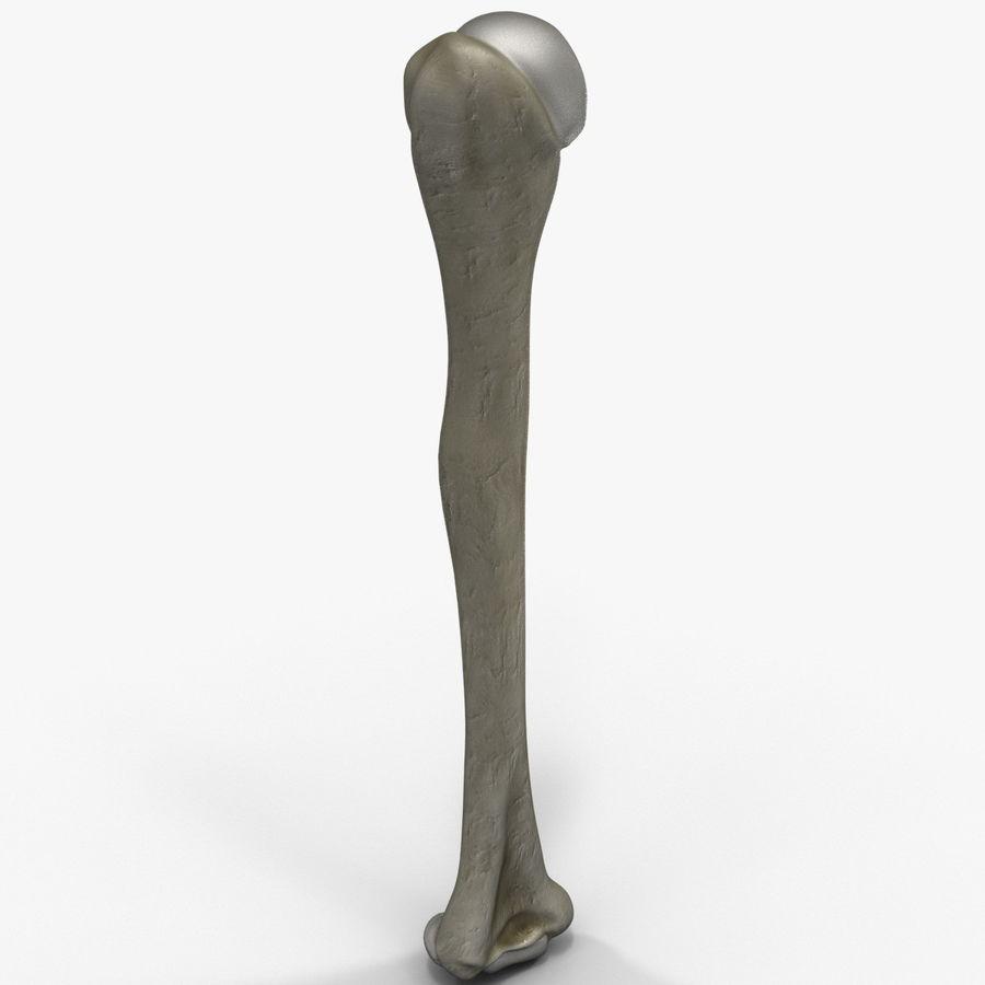 Kość ramienna royalty-free 3d model - Preview no. 5
