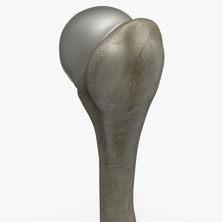Kość ramienna royalty-free 3d model - Preview no. 7