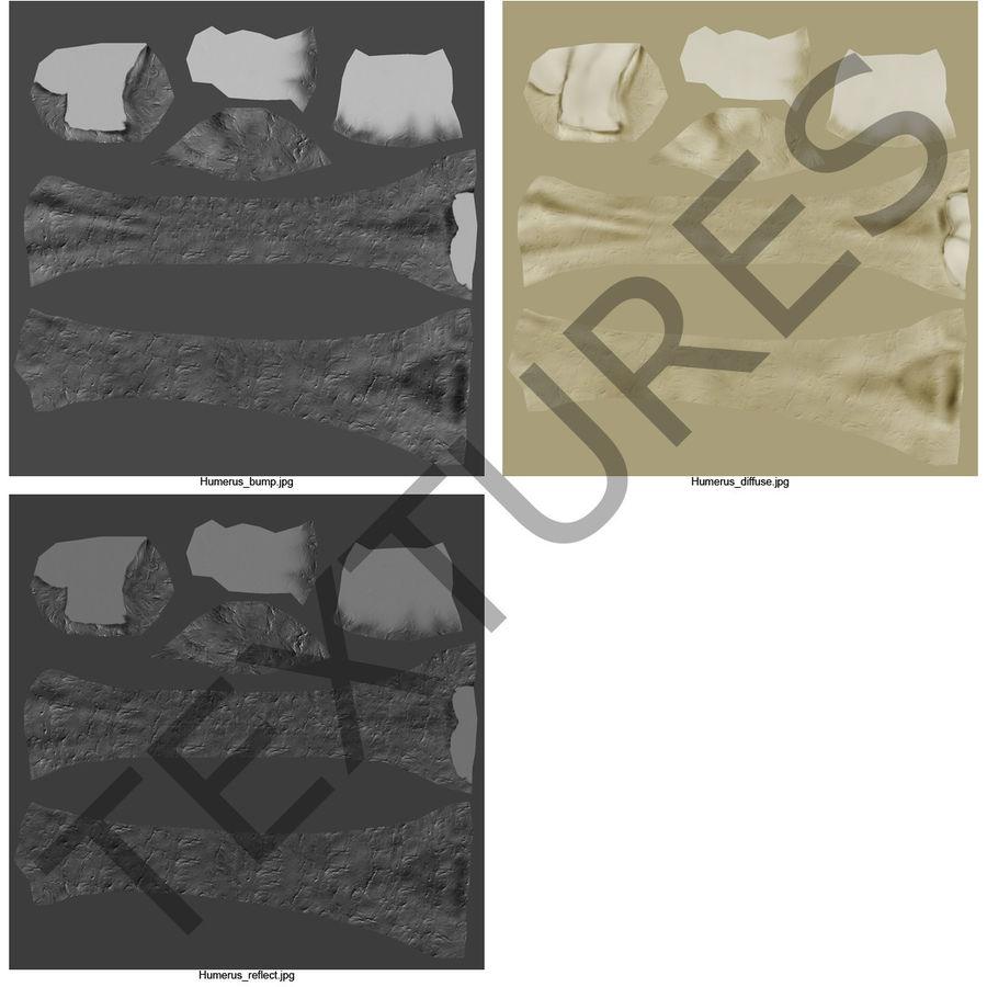 Kość ramienna royalty-free 3d model - Preview no. 18