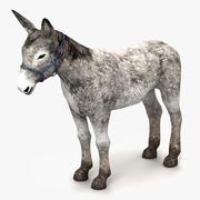 Donkey White 3d model