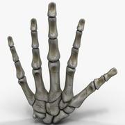 손 뼈 3d model