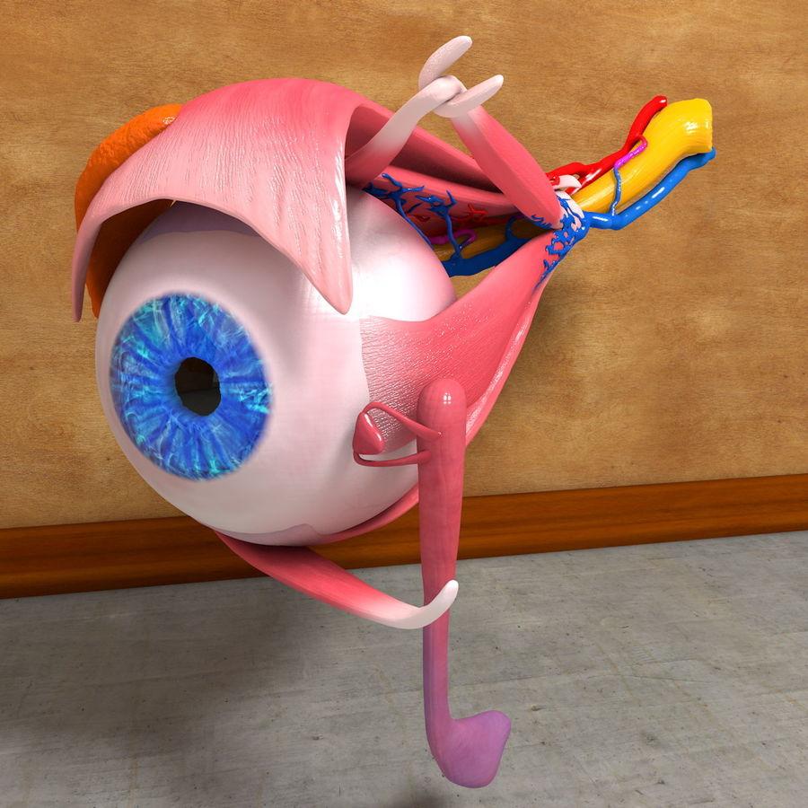 Human Eye Anatomy Muscles Organ Nerves royalty-free 3d model - Preview no. 9