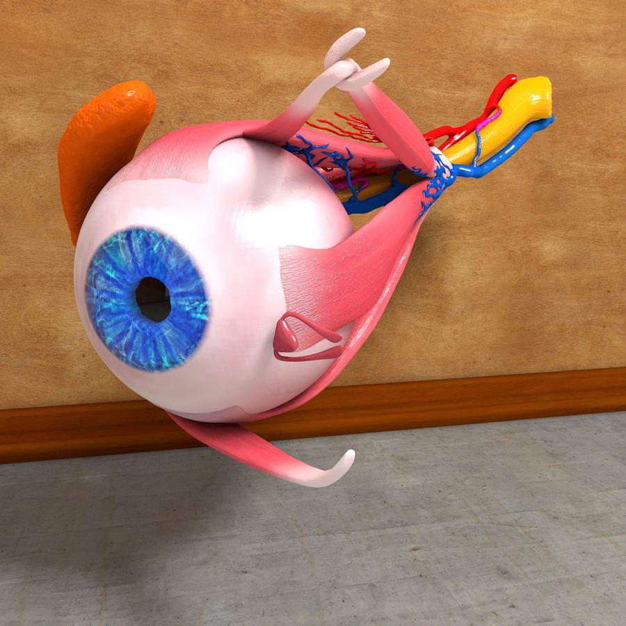 Human Eye Anatomy Muscles Organ Nerves royalty-free 3d model - Preview no. 10