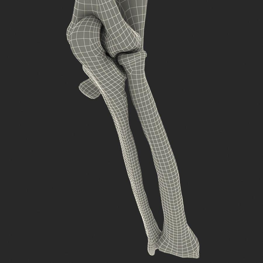 二头肌肌肉解剖 royalty-free 3d model - Preview no. 23