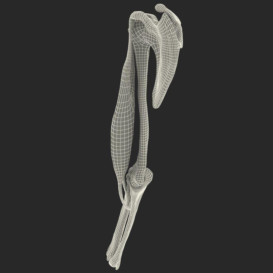 二头肌肌肉解剖 royalty-free 3d model - Preview no. 19